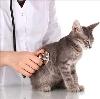 Ветеринарные клиники в Викулово